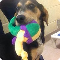 Adopt A Pet :: 1-1 Lady - Triadelphia, WV
