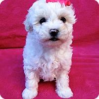 Adopt A Pet :: Joanie - Irvine, CA