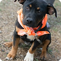 Adopt A Pet :: Teena - Muldrow, OK