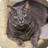 Adopt A Pet :: Oliver - Kettering, OH
