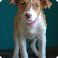 Adopt A Pet :: Viola - Waldorf, MD