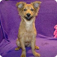 Adopt A Pet :: 16-d06-032 Gidget - Fayetteville, TN
