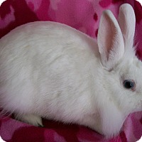 Adopt A Pet :: Dory - Harrisburg, PA