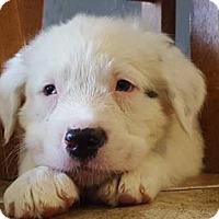 Adopt A Pet :: Baxter - Surprise, AZ