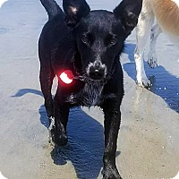 Adopt A Pet :: Chewy - Adopted! - San Diego, CA