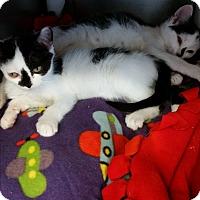 Adopt A Pet :: Hasley - Chippewa Falls, WI