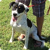 Adopt A Pet :: Rubicon - Harrisonburg, VA