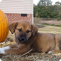 Adopt A Pet :: Juliet - Attalla, AL