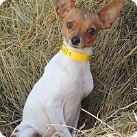 Adopt A Pet :: Tortilla - Joplin, MO
