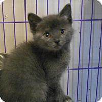Adopt A Pet :: ELLA - Duncan, OK