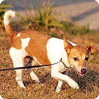 Adopt A Pet :: Cici - Maynardville, TN
