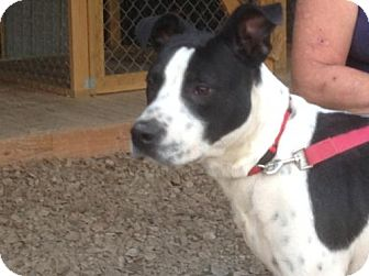 Terrier (Unknown Type, Medium) Mix Dog for adoption in Westwood, New Jersey - Colfax