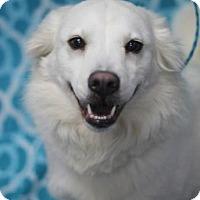 Adopt A Pet :: Itsy Luv - Walla Walla, WA