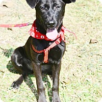 Adopt A Pet :: Nina - Castro Valley, CA