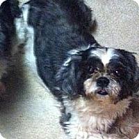 Adopt A Pet :: Mia - Philadelphia, PA