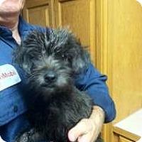 Adopt A Pet :: Guppy - Sugar Land, TX