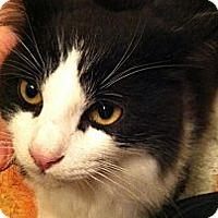 Adopt A Pet :: Moo Moo - Brea, CA