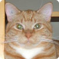 Adopt A Pet :: Goldy - Calgary, AB