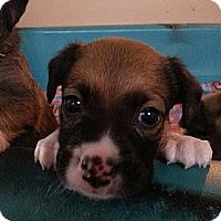 Adopt A Pet :: Sanford - Russellville, KY