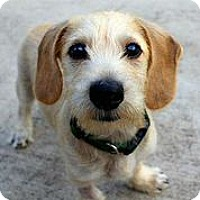 Adopt A Pet :: Hutchinson - Austin, TX
