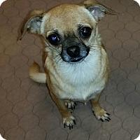 Adopt A Pet :: Meagan - Phoenix, AZ