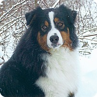 Adopt A Pet :: Myles - Elk River, MN