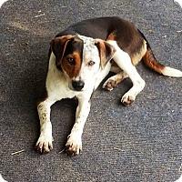 Adopt A Pet :: Leena - Pawling, NY