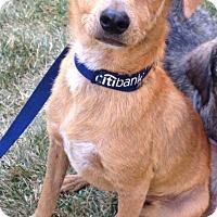 Adopt A Pet :: Teddy - Van Nuys, CA