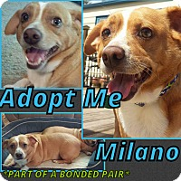 Adopt A Pet :: Milano - Cheney, KS
