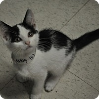 Adopt A Pet :: Michael - Rockaway, NJ