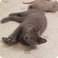 Adopt A Pet :: Teddy - Fayetteville, TN