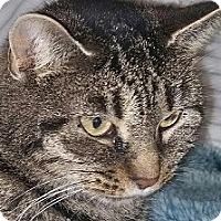 Adopt A Pet :: Nutmeg-EXTRAORDINARY? - Naperville, IL
