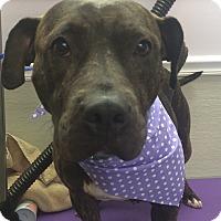 Adopt A Pet :: Esther - Oak Ridge, NJ