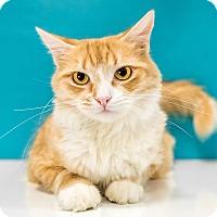 Adopt A Pet :: Autumn - Chandler, AZ