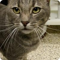 Adopt A Pet :: Tommy Boy - Georgetown, TX
