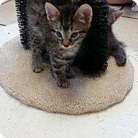 Adopt A Pet :: Thetis - Chippewa Falls, WI