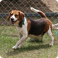 Adopt A Pet :: Davie - Tampa, FL