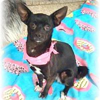 Adopt A Pet :: Ariel - Las Vegas, NV