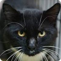 Adopt A Pet :: Nelson - Medford, MA