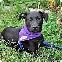 Adopt A Pet :: Abby Sciuto~meet me!~ - Glastonbury, CT