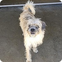 Adopt A Pet :: Alice - Mission Viejo, CA