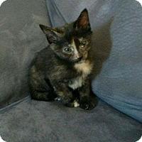 Adopt A Pet :: Titania - Camden, DE