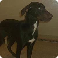 Adopt A Pet :: CHARLIE - Gloucester, VA