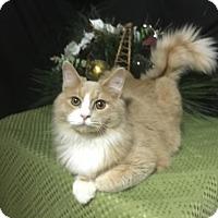 Adopt A Pet :: Mufasa - Fayetteville, GA