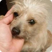 Adopt A Pet :: Lucky Joe Camo in TX - Providence, RI