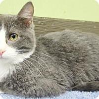 Adopt A Pet :: Jesse - Benbrook, TX