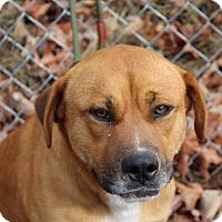 Adopt A Pet :: George - Harrisonburg, VA