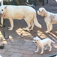 Adopt A Pet :: Elsa - Citrus Springs, FL