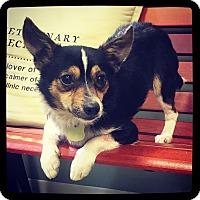 Adopt A Pet :: Clay - Grand Bay, AL