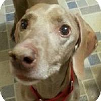 Adopt A Pet :: Dixon - St. Louis, MO